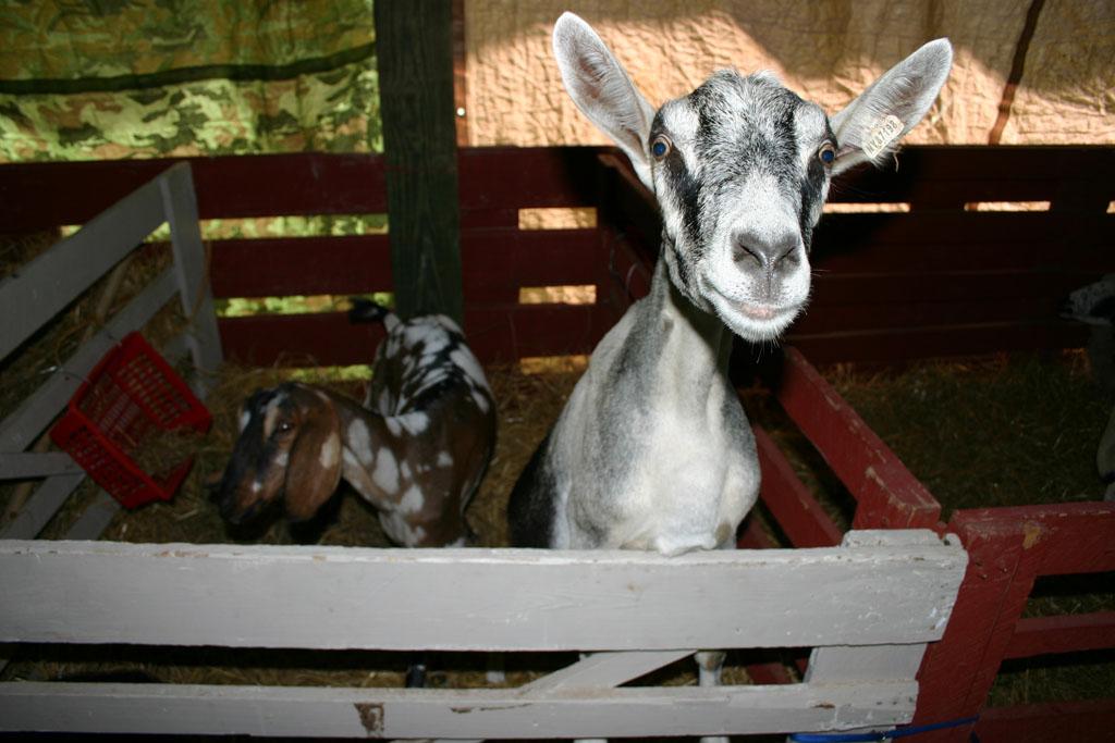 Living In Dryden Inside The 4 H Fair Pole Barn