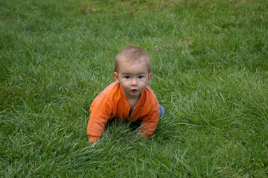 Sungiva enjoys the grass.