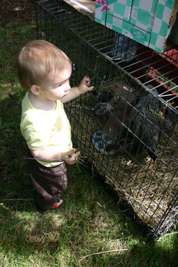 Sungiva visits the chickens at Dryden Dairy Day.