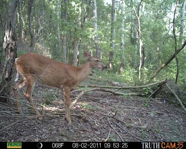 Visiting deer.