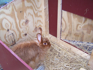 Elderberry Corners resident.