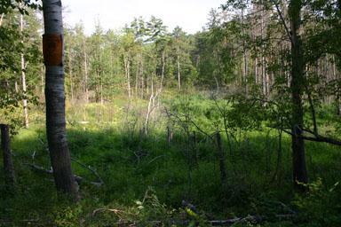 Former beaver pond.