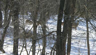 Deer convening