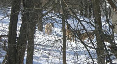 Deer conversing