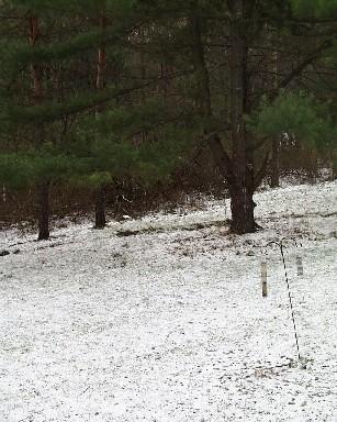 Snow, November 14, 2003